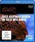Cover zu Discovery HD: Austin Stevens - Der kleine Leopard Das Aufwachsen in der Wildnis